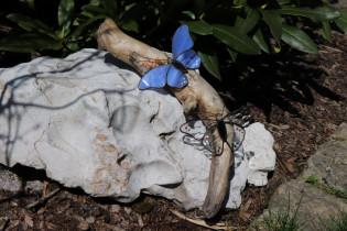 butterflies - historical glass